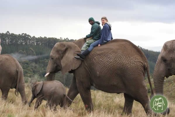 elephant_walk_safari.jpg