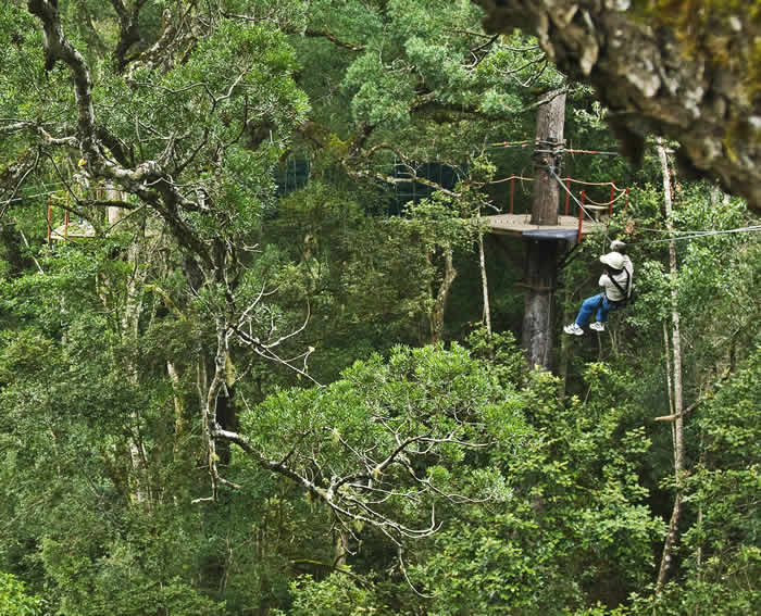 forest_canopy_tours1.jpg