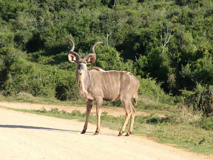 nearby_game_reserve.jpg