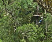 Forest Canopy Tours